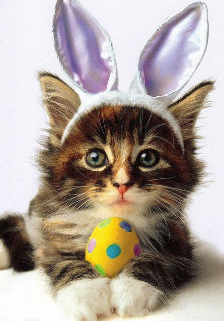 Adorable Dogs and Cats Dressed Up for Easter   Animals Zone