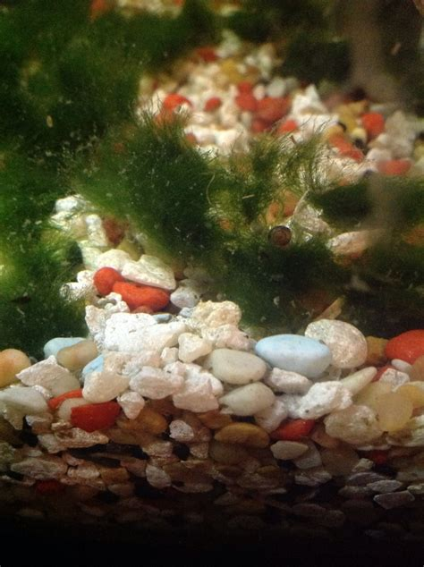 How To Make New Aquatic Plants Snail Free In 15 Minutes Or