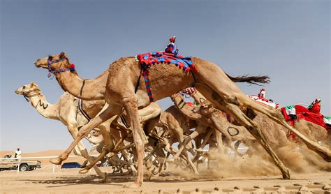 In pictures: Meet the droids who race camels | Middle East Eye