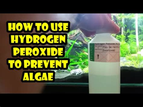 92 - How to use hydrogen peroxide to prevent algae - YouTube