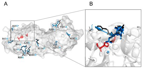 IJMS   Free Full-Text   Structural and Evolutionary